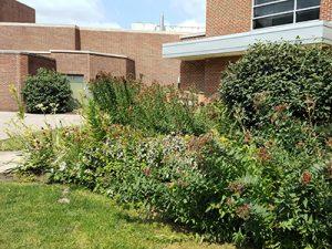 sustainability st albert's garden
