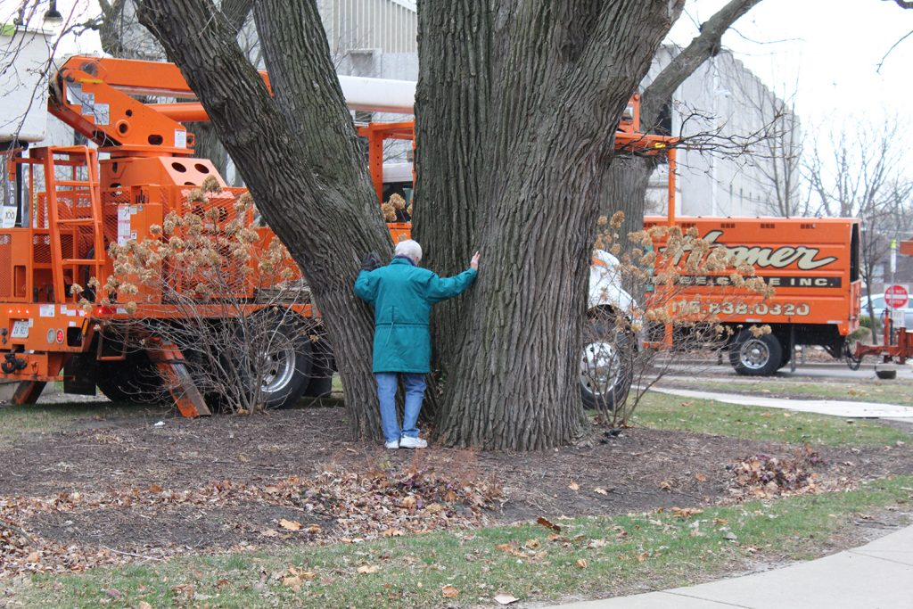 Sister Dolores Zemont prays over the Three Oaks before they are removed from campus after approximately 145 years.